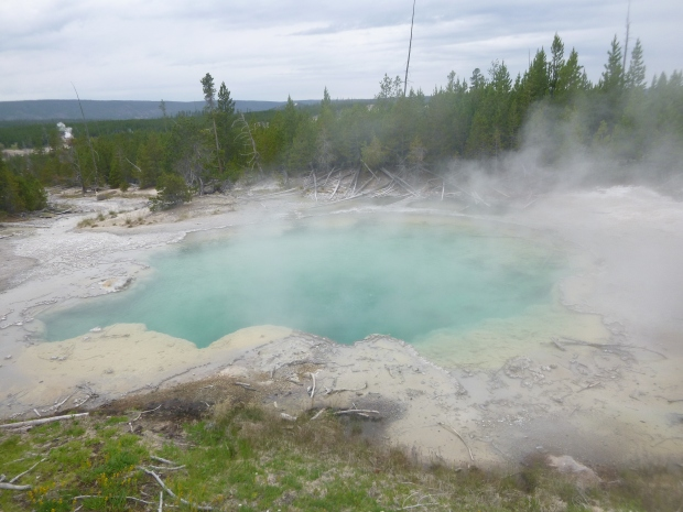 Hot spring at Norris Geyser Basin, Yellowstone National Park, WY