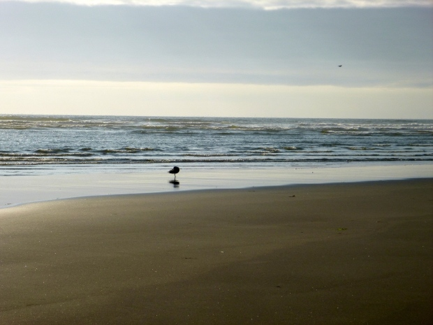 Seagull at sunset, Benson Beach, Cape Disappointment State Park, WA