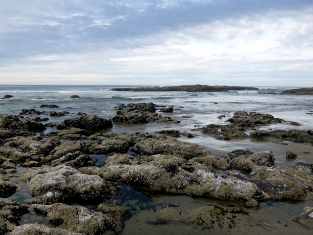 Barnacle-encrusted basalt exposed at low tide, Pacific Ocean, Oregon