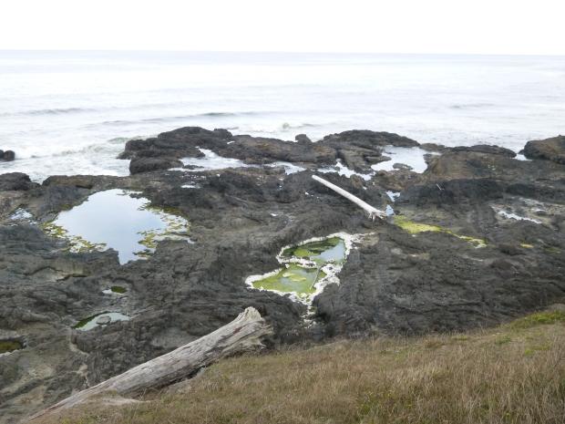 Tide pools in basalt, Pacific Coast, Oregon
