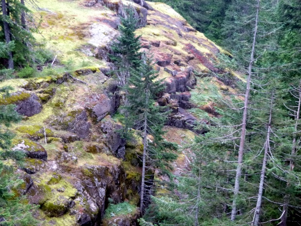 Moss reclaiming lava fields next to Box Canyon. Contours of rock show patterns of how the magma cooled.  Mount Rainier National Park, WA