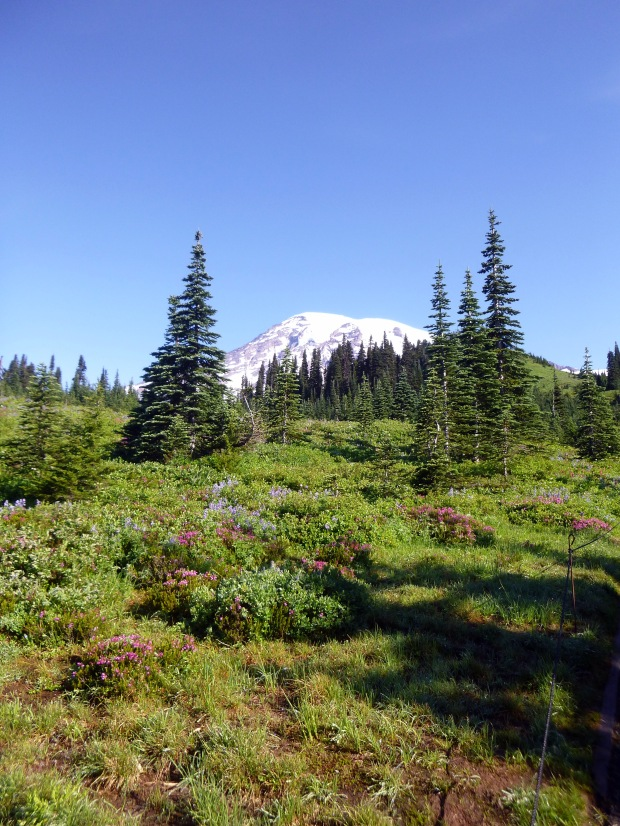 View of the Mount Rainier from near the trailhead, Skyline Loop Trail, Mount Rainier National Park, WA