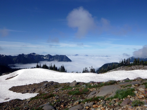 Looking out over the clouds on the climb up the mountain, Skyline Loop Trail, Mount Rainier National Park, WA