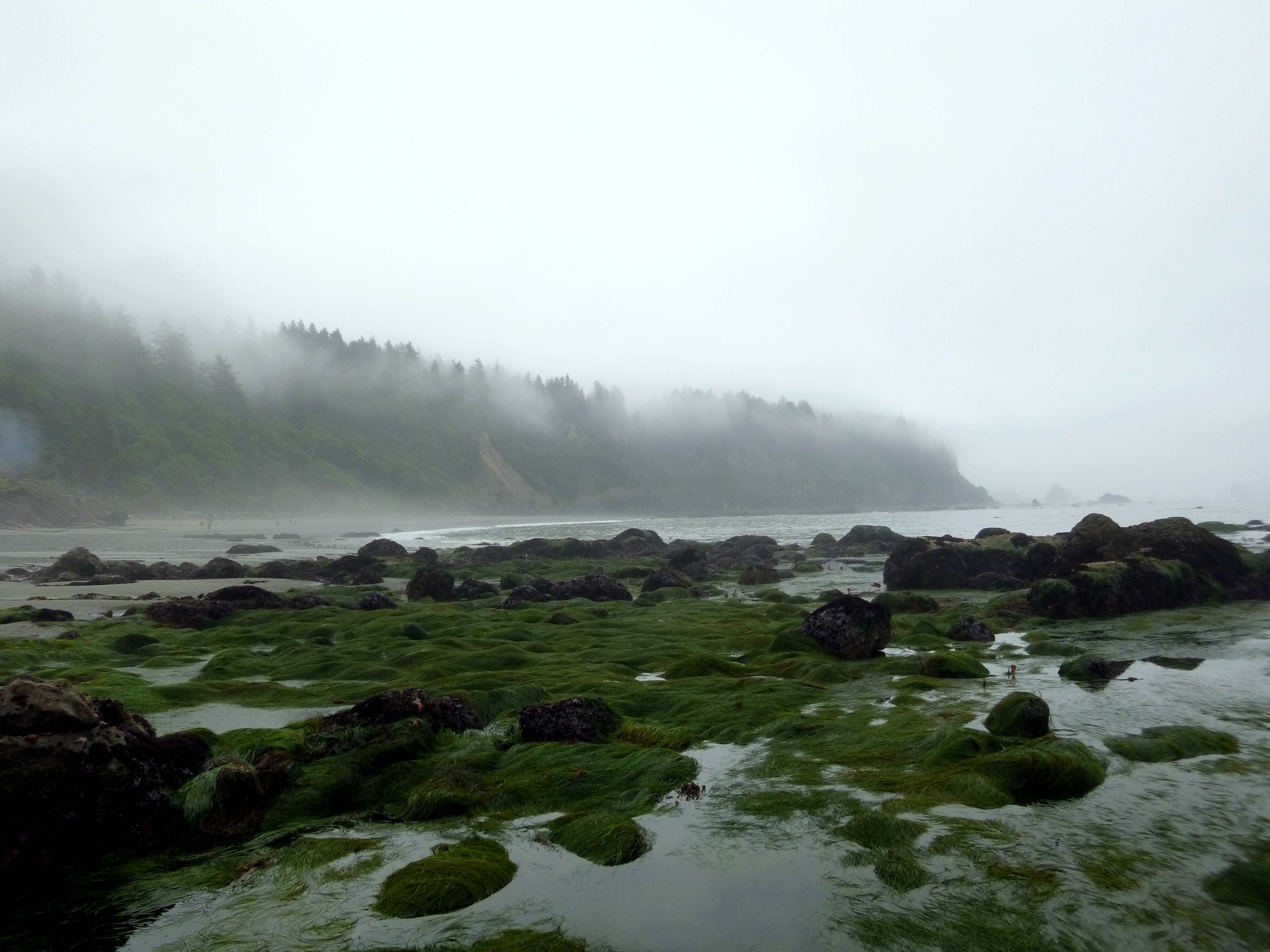 Olympic National Park Part 1 Beaches And Swimming