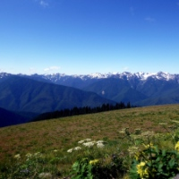 Olympic National Park, Part 2: Mountains, Forest, and Wildlife