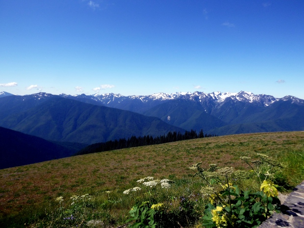 Olympic Range with glaciated peaks, Hurricane Ridge, Olympic National Park