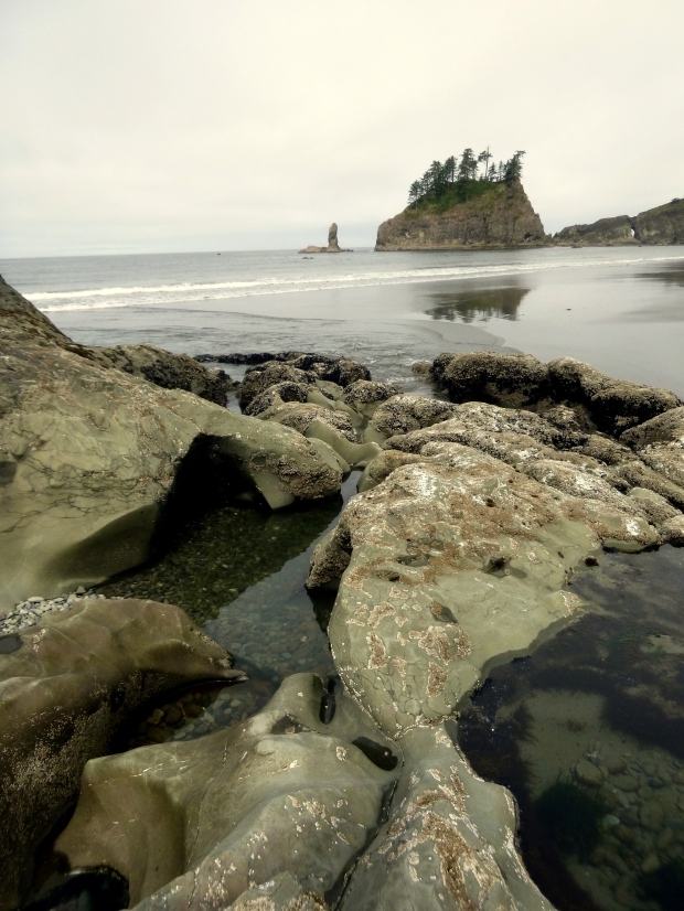 Small tide pools in eroded sea stack, Second Beach, Olympic National Park