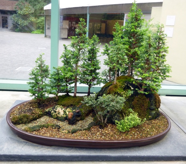 Bonsai grove in greenhouse, Pacific Rim Bonsai Collection, Federal Way, WA
