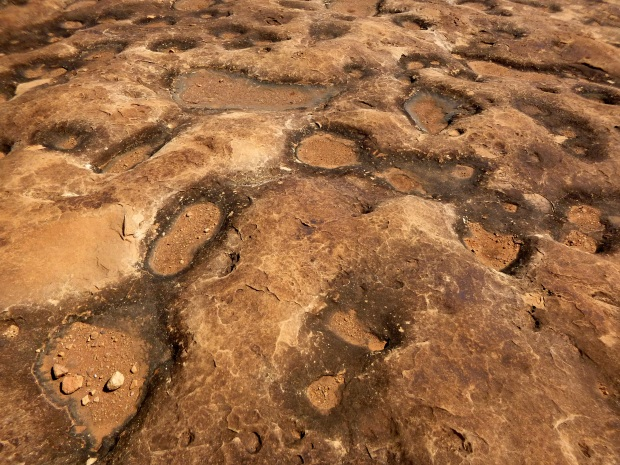 """Potholes"" or water erosion in the sandstone, Pothole Point Trail, Needles, Canyonlands National Park, Utah"