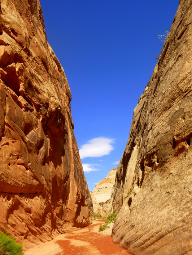 Capitol Gorge Trail through the wash, Capitol Reef National Park, Utah