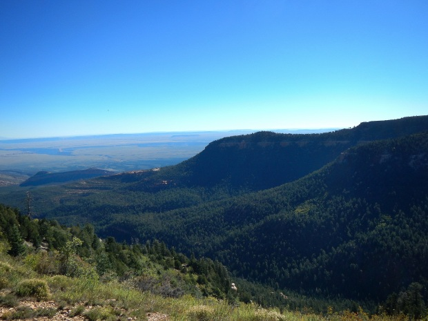 Overlook of Kaibab National Forest from Saddle Point, Arizona
