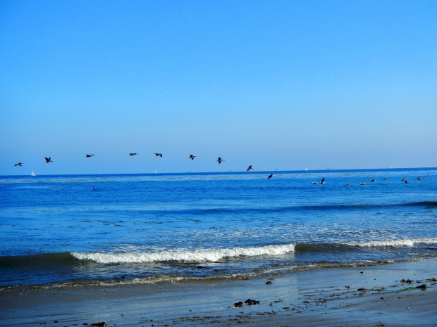 Birds flying over the surf, Shoreline Park, Santa Barbara, California