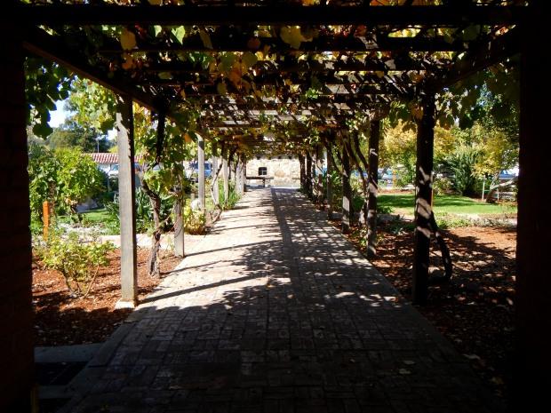 Trellis with grapevines, Mission San Luis Obispo, California