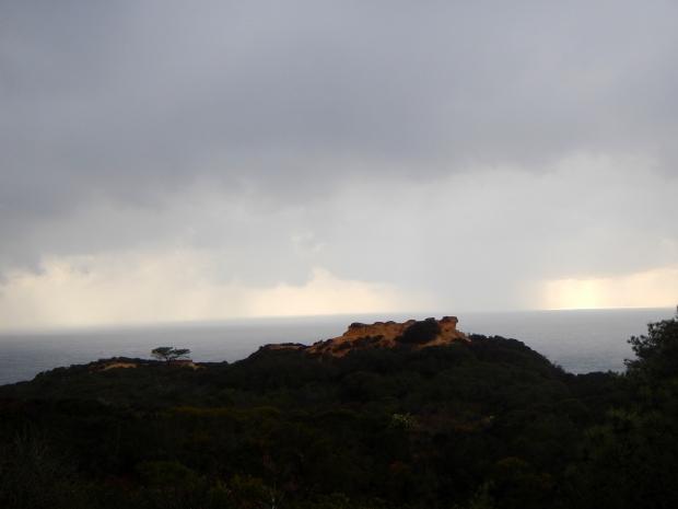 Cliffs with Torrey Pines, Torrey Pines State Park, San Diego, California