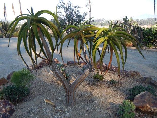 Desert Cactus Garden, Balboa Park, San Diego, California
