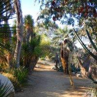 San Diego, Part 4: The Outdoor Gardens of Balboa Park