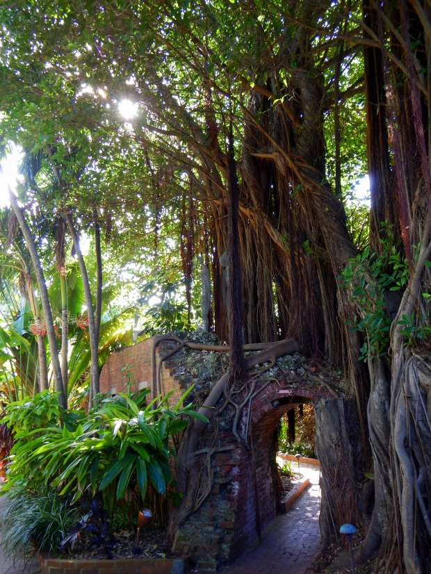 Mangrove trees and arch, Fort Martello, Key West, Florida