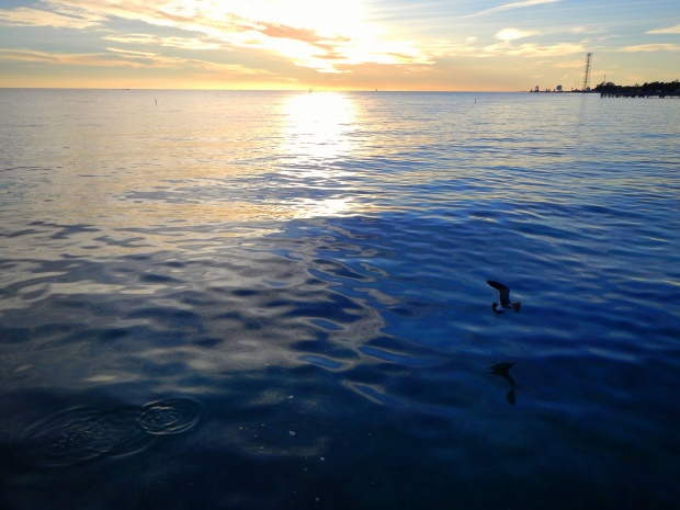 Bird over the water, Key West, Florida