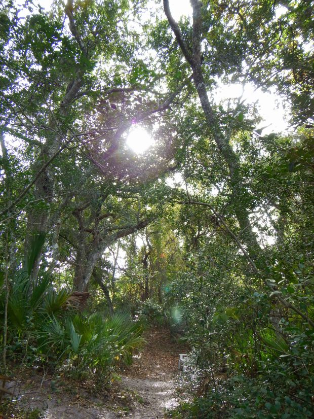 Little trail behind St. Augustine Lighthouse, Florida