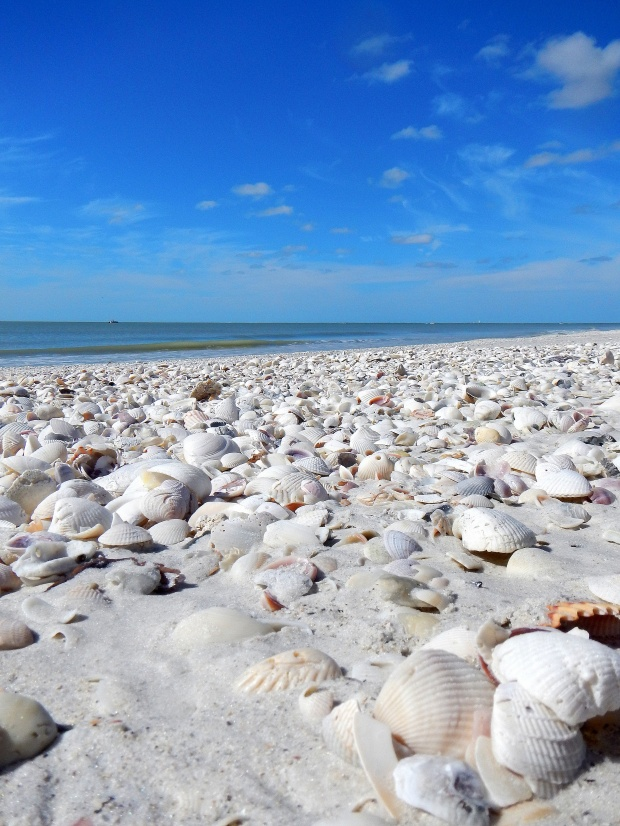 Shells on the beach at Lovers Key State Park, Florida