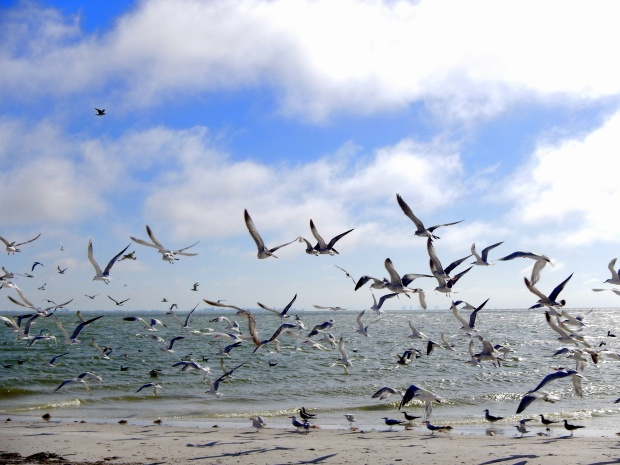 Seagulls on beach by the lighthouse, Sanibel Island, Florida