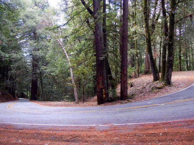 Curve in the road at trail crossing, Redwood Trail, Mount Madonna County Park, California