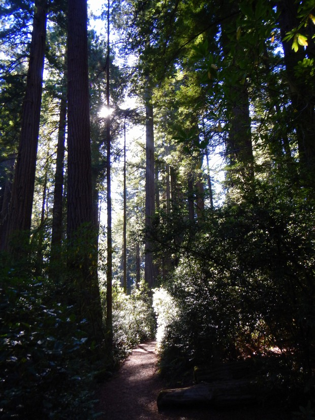 Trail, Lady Bird Johnson Grove, Redwoods National Park, California