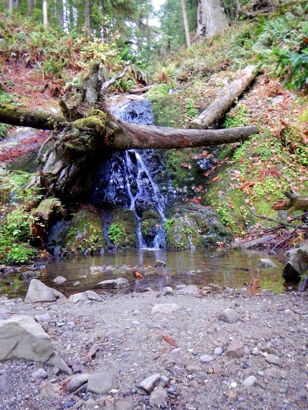 Fern Falls, Boy Scout Tree Trail, Jedediah Smith Redwoods State Park, California
