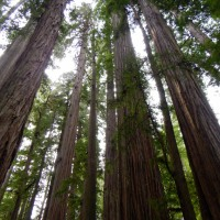 Redwoods National and State Parks, Part 1: An Introduction