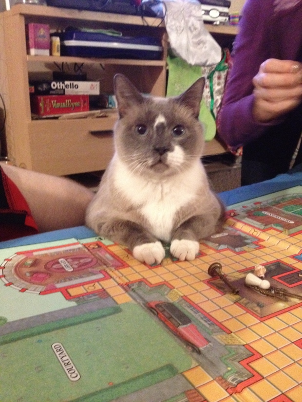 Vladimir the cat playing Clue