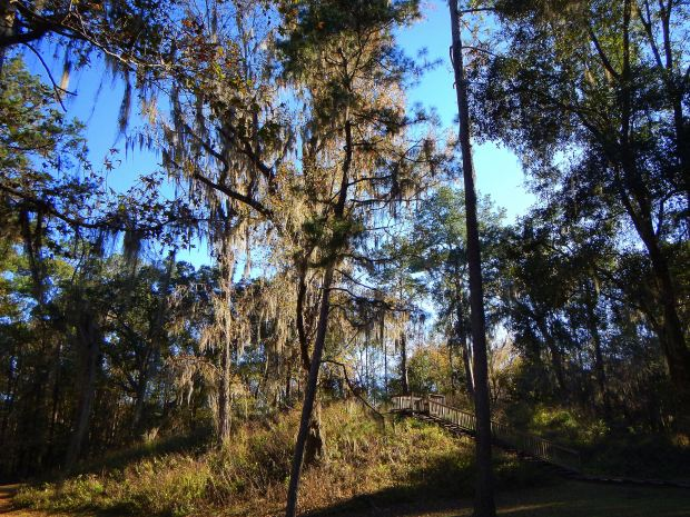 Mound 3, Lake Jackson Archaeological State Park, Tallahassee