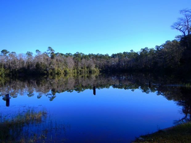 Wright Lake, Apalachiola National Forest, Florida