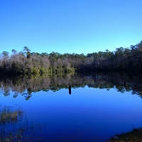 Apalachiocola National Forest: Wright Lake Trail