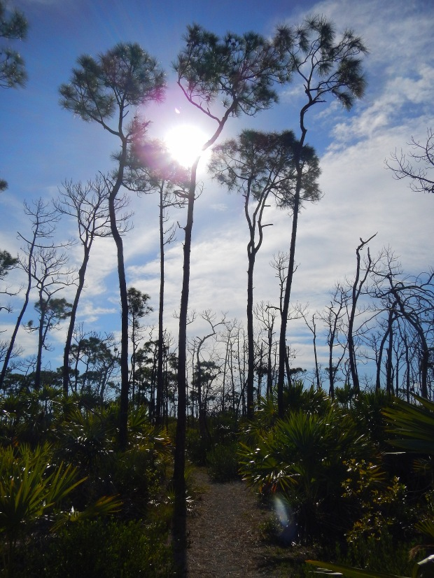 Jack Watson Nature Trail, Key Deer Sanctuary, Big Pine Key, Florida