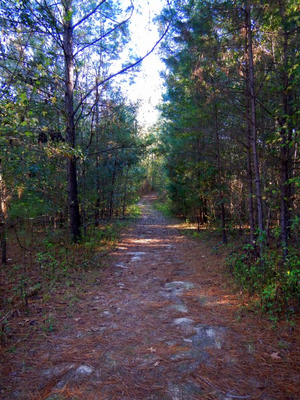 Trail at Lake Jackson Archaeological State Park, Tallahassee