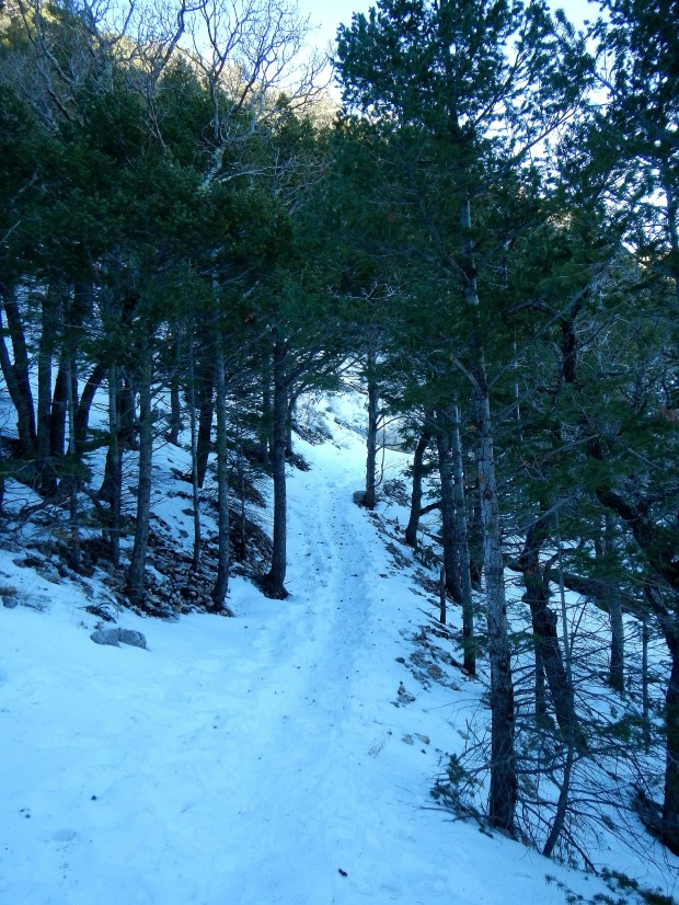 Snow-covered trail through the pines, Guadalupe Peak Trail, Guadalupe Mountains National Park, Texas