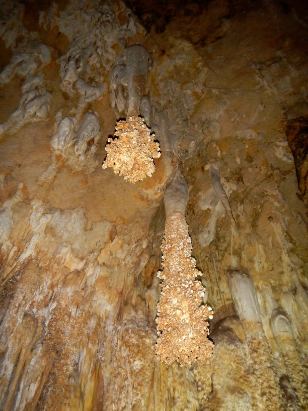 Lion's Tail, Big Room, Carlsbad Caverns National Park, New Mexico