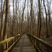 Cypress Grove Nature Park, Jackson, Tennessee