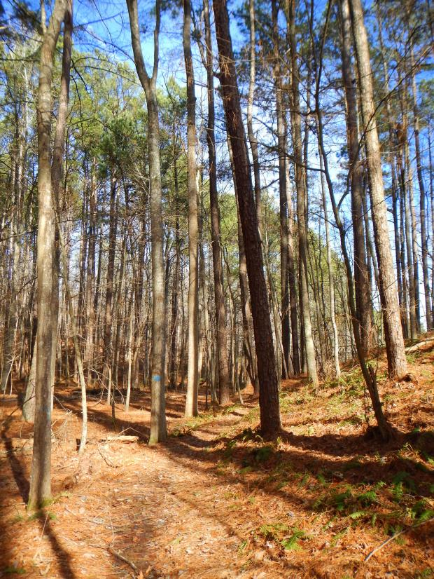 Pin Oak Lake Trail, Natchez Trace State Park, Tennessee