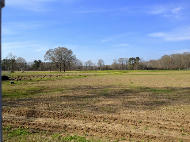 Fields at New Day Farm, Clinton, Louisiana