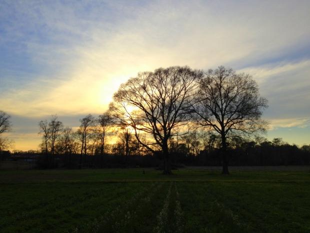 Sunset over the fields, New Day Farm, Clinton, Louisiana