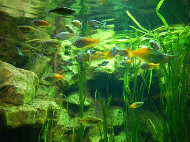Amazing Reef exhibit, Shedd Aquarium, Chicago, Illinois