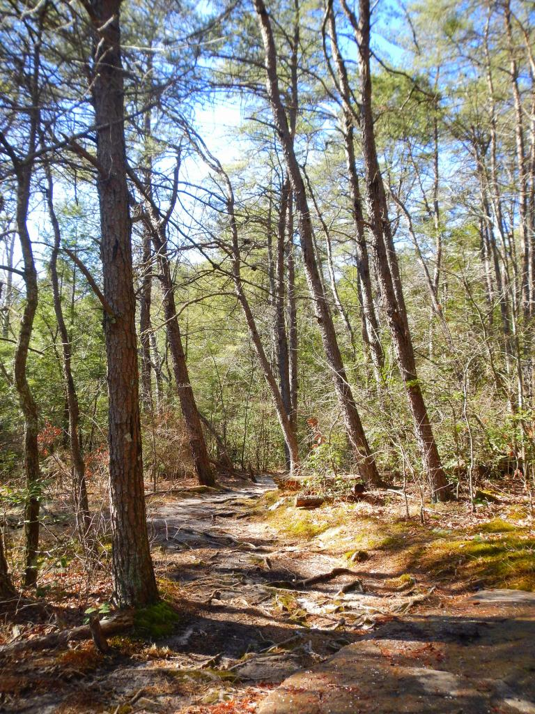 WWOOFing Part 4: Searching for Signs of Spring on Fiery Gizzard Trail