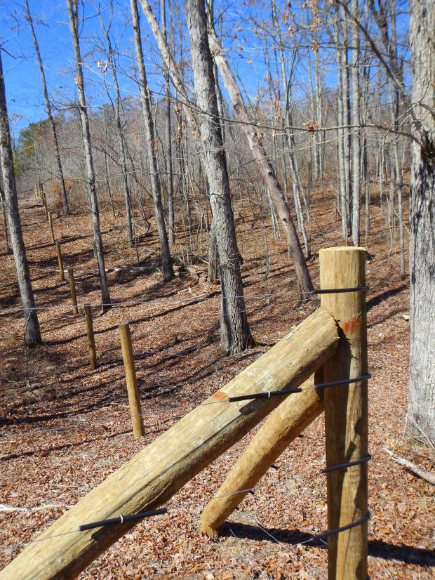 Fence in wooded acreage