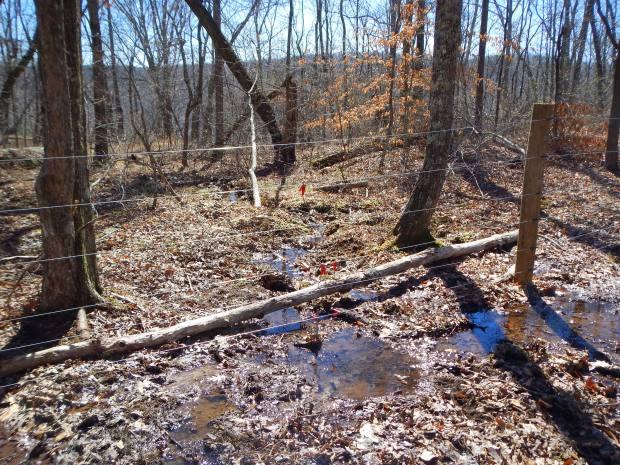 Creek along west side of property