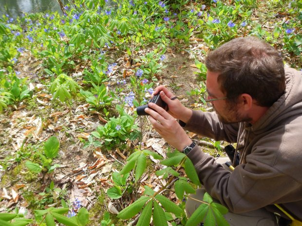 Jonathan photographing bluebells, Bluebell Island, Tennessee