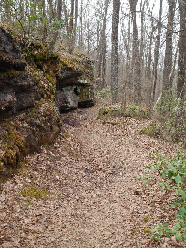 Trail into Shake Rag Hollow, Perimeter Trail, Sewanee Domain, Tennessee