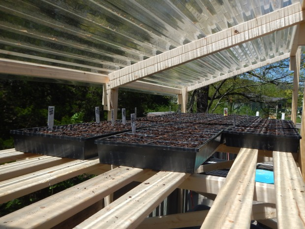 Seedlings planted, Jasper, Tennessee