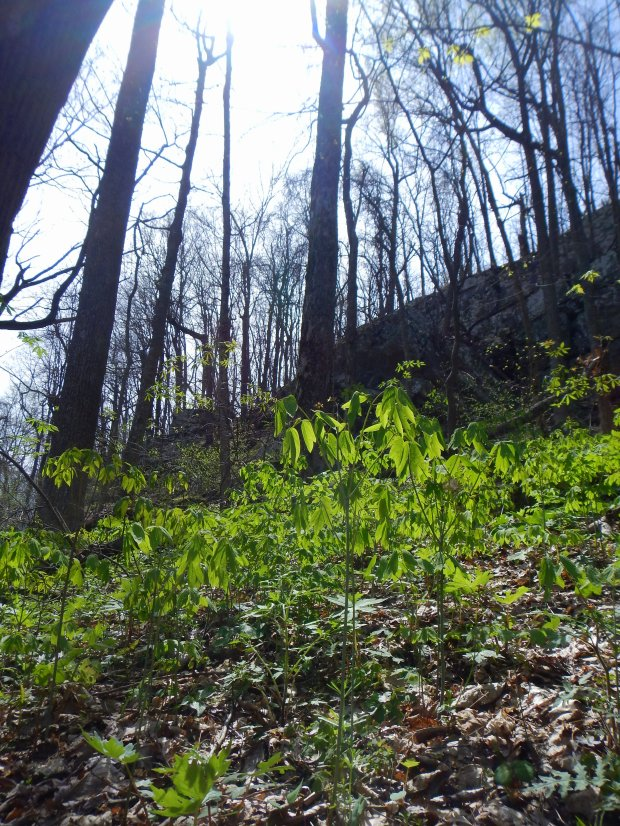 Looking up at the cliffs from the Perimeter Trail, Sewanee Domain, Tennessee