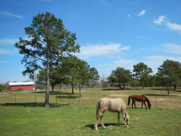 SAA Ranch, White City, Tennessee